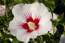 Vivaces Fleuries Tout L été by Arbustes 224 Floraison D 233 Corative D 233 T 233