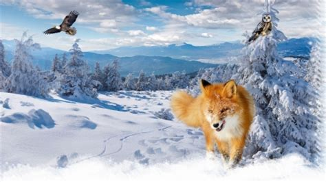 firefox themes snow fox in snow winter nature background wallpapers on