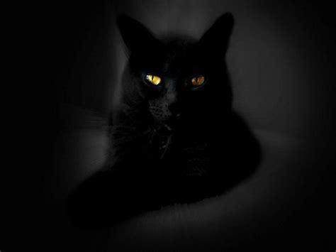 desktop wallpaper black cats wallpapers black cat wallpaper cave