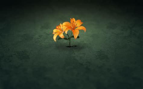imagenes de flores solitarias lohan dantas flor do deserto