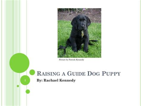 guide puppy raising ppt raising a guide puppy powerpoint presentation id 2214879