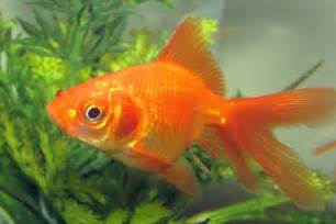 How can I introduce new fish to the tank?   PetSpot