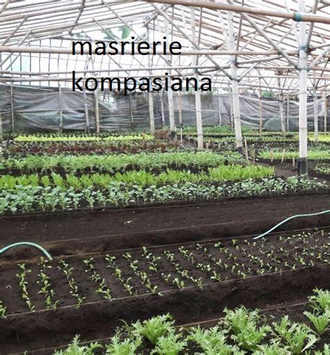 Sekam Bakar Bandung cuci mata dan belajar sehat di kebun sayuran organik