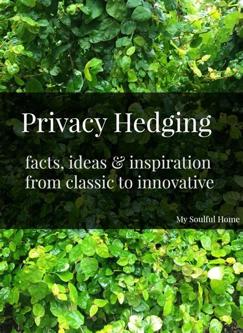 privacy hedging ideas inspiration facts bloggers