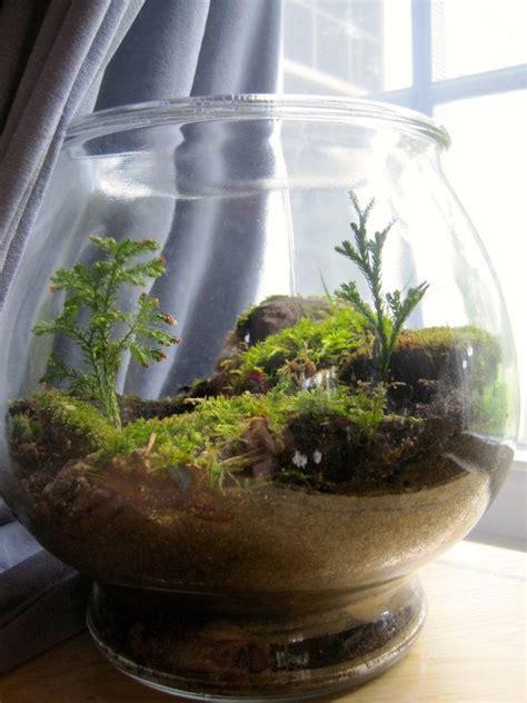 interesting terrarium indoor garden terrarium indoor
