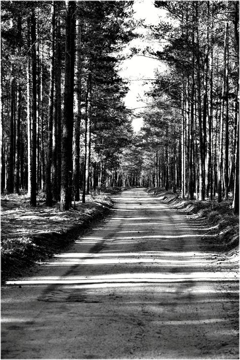 white black forest black and white forest road by joukatsolen on deviantart