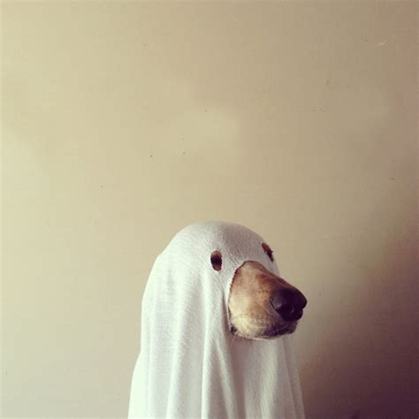 ghost costume for dogs ghost costumes hawaii kawaii