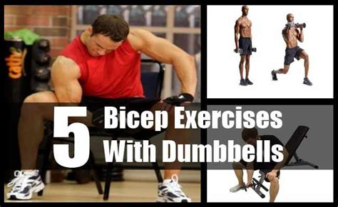 5 bicep exercises with dumbbells various dumbbells