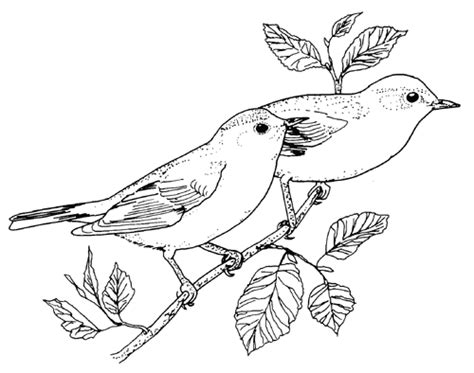 texas bird coloring page pin number coloring worksheets for preschoolers on texas