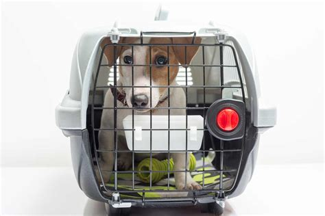how to crate a with separation anxiety how to use a puppy crate to ease separation anxiety