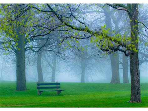 spring park fog  bench wallpapers