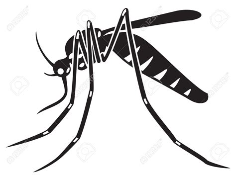clipart vector tiger mosquito clipart clipground