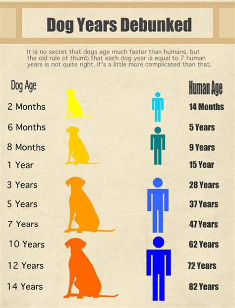 what age can dogs puppies debunking the years myth global animal transport