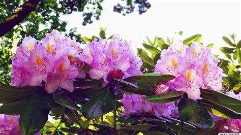 Orchidee Gelbe Blätter 5399 by Die 94 Besten Blumen Hintergrundbilder Hd 1920x1080