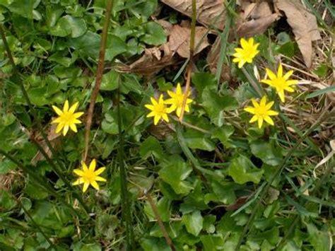 bloemen geel lange steel tuin onkruid en mosbestrijding