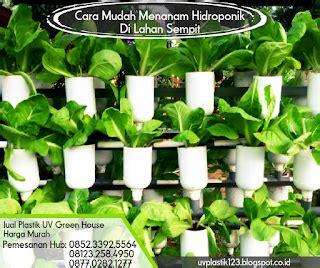 Jual Bibit Kangkung Sidoarjo cara mudah menanam hidroponik di lahan sempit pabrik dan
