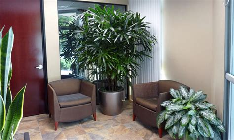 desk plants no office plants create an interesting entrance there are