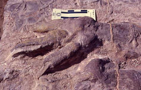 dinosaurs fossils utah geological survey