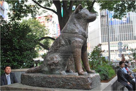 hachi the statue of hachiko by unadzuki on deviantart