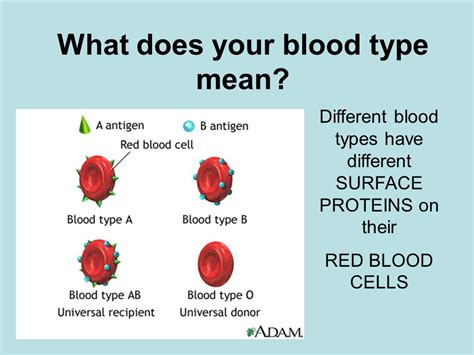 types meaning blood typing honors biology powerpoint 3 ppt video