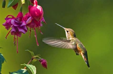 hummingbird desktop background   fun