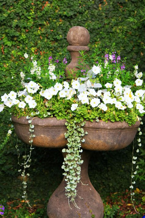 Beautiful Planters by The Graceful Gardener 187 August Garden Bloom Day