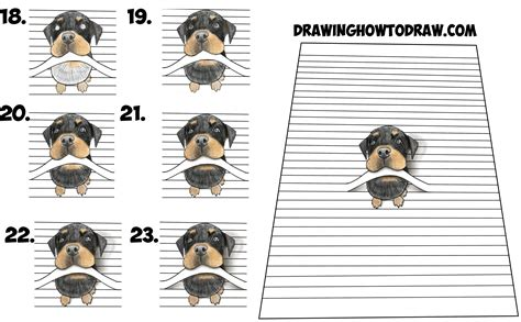 how to draw a rottweiler how to draw a rottweiler puppy www pixshark images galleries with a bite