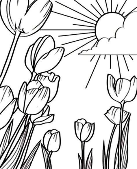 tulips  beautiful sunshine  tulips field coloring