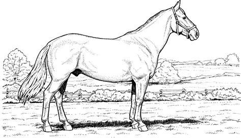 coloring pages of appaloosa horses appaloosa horse coloring pages coloring pages