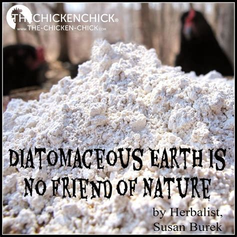 raising chickens naturally diatomaceous earth is no