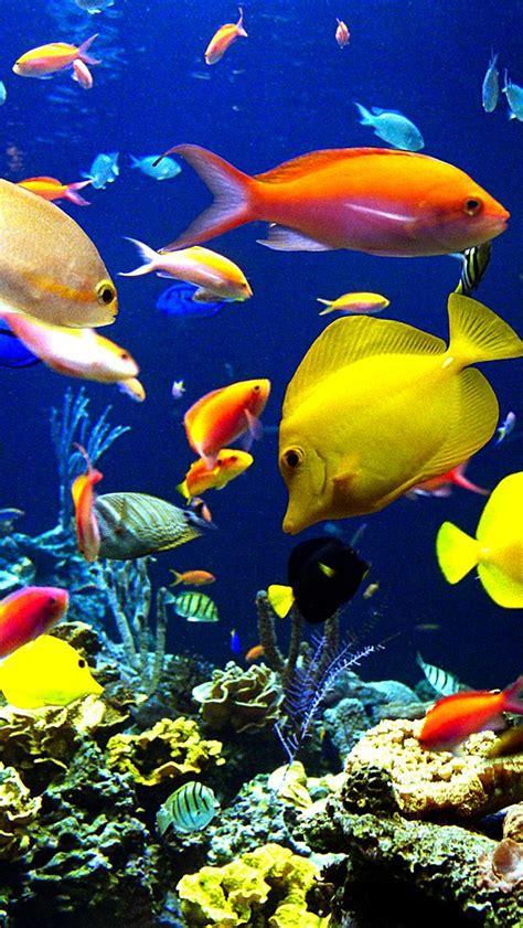 wallpaper iphone ikan tons of fish iphone 5 wallpaper 640x1136