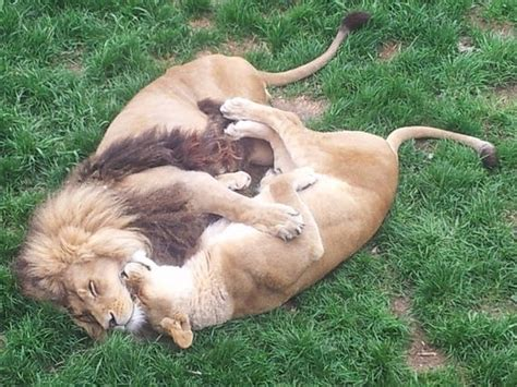 most comfortable cuddling positions most important cuddling positions barnorama