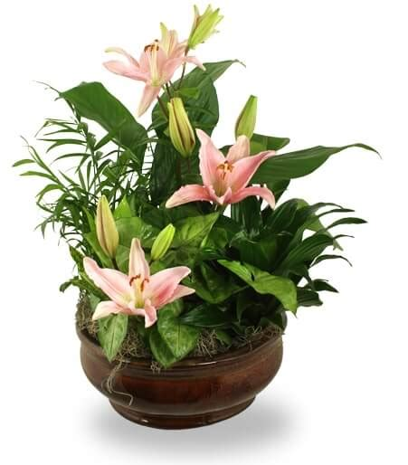 common house plants for funerals sympathy plants for home delivery