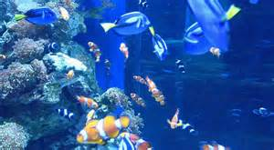 The Aquarium Aquarium Of The Pacific Discount Tickets Save 15 95