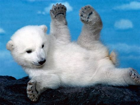 imagenes de animales en extincion fotos de animales en peligro de extinci 210 n