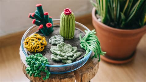 New Year Home Decor how to crochet a terrarium including 7 different succulents