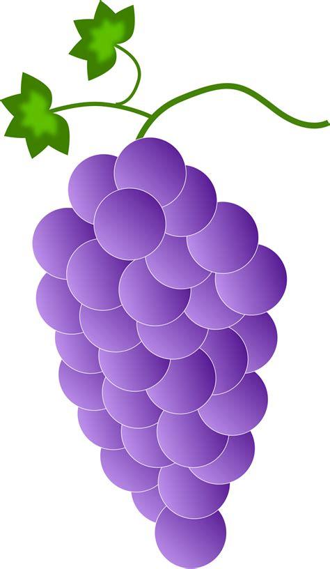 grape color grapes clipart purple color pencil and in color grapes