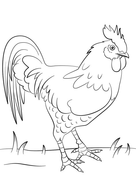 kumpulan gambar mewarnai ayam hitam putih