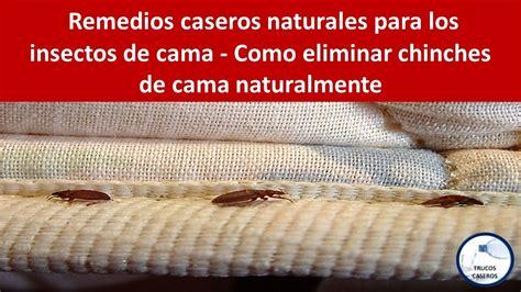eliminar chinches cama remedios caseros naturales para los insectos de cama