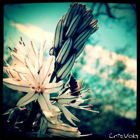 fiori immagini gratis fiori immagini gratis nel web fiori bellissimi unici e