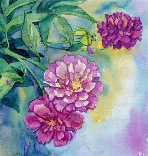 fiori di peonia fiori di peonia acquerello foto stock 169 artsandra 33426187