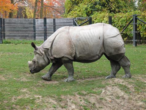 imagenes de animales wikipedia animales en peligro de extincion y extintos info taringa