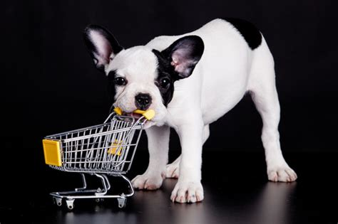 stores that allow dogs napa s 7 favorite friendly stores