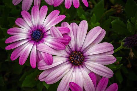 imagenes jpg de flores imagen de flores hermosas para fondo de pantalla foto gratis