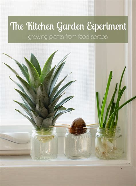 plants in the kitchen kitchen science experiments for kids growing with food