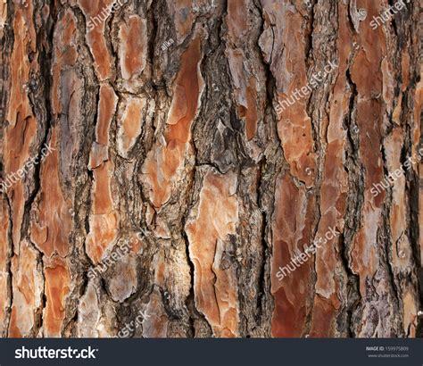 bark of pine tree stock photo 159975809 shutterstock