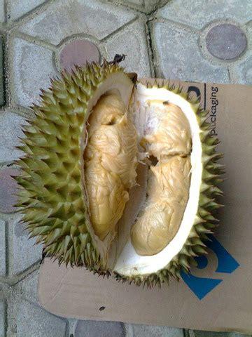 buah durian durian jebus