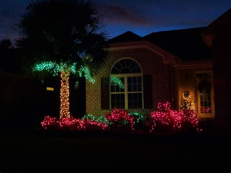 christmas lights for bushes 24 best windmill palms images on pinterest windmills