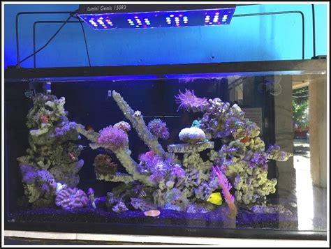 beleuchtung aquarium aquarium led beleuchtung selber bauen meerwasser