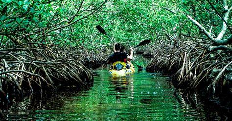 baratang island natures secluded retreat  andaman